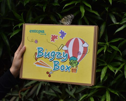 Entopia Bugzy Box Website Photos 1